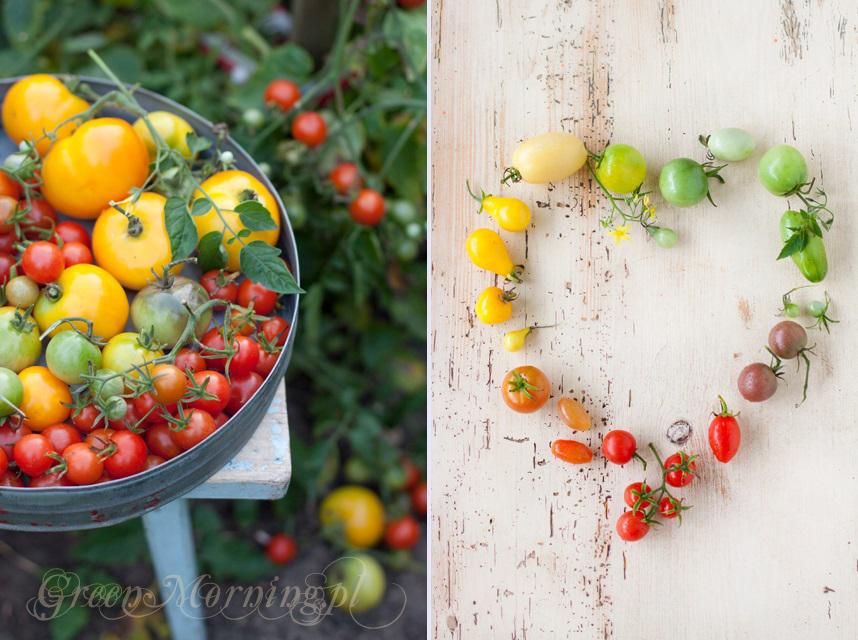 kolorowe pomidory