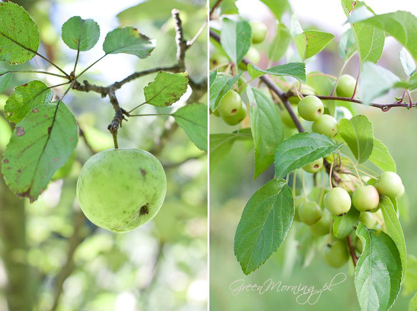 jabłka zielone