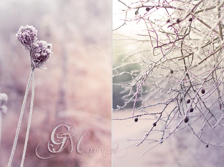 IMG_2952-horz