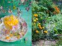 Melonowa granita z mango i wodą różaną